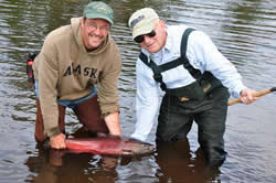 Cliff's King Salmon - Deshka Wilderness Lodge - Alaska