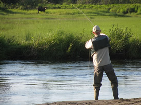 Flyfishing for Moose